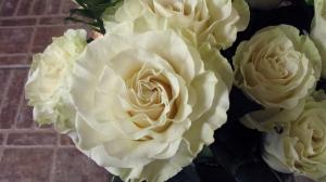 Fleuriste Fleurs D'Élysée, Rawdon
